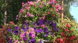 Жуковские озеленители названы среди победителей конкурса «Цветы Подмосковья»