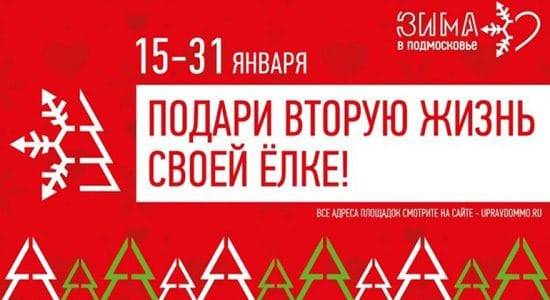 В Жуковском открылись два пункта для сбора использованных елок