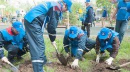МОЭСК провела компенсационные высадки деревьев и кустарников в Жуковском