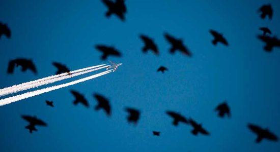 """В аэропорту """"Жуковский"""" птиц будут отпугивать пропановой пушкой"""