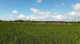 20 гектаров земли передали в Жуковском многодетным за последние пять лет