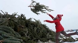 В Жуковском 15 января откроются два пункта приема натуральных елок, отслуживших свой срок