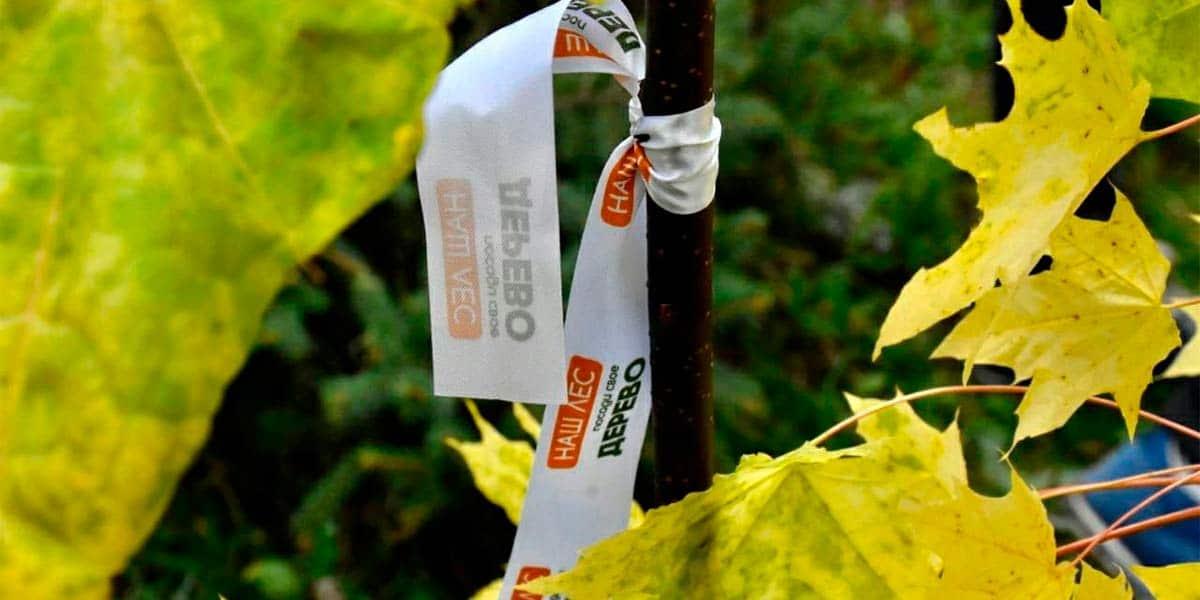 18 сентября в Жуковском пройдет второй этап акции «Наш лес. Посади свое дерево»